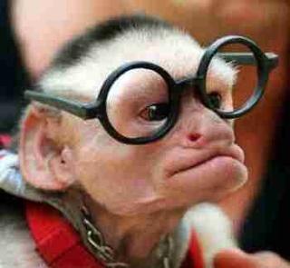 crazy_monkey.jpg